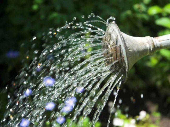 Чистая вода льющаяся из лейки