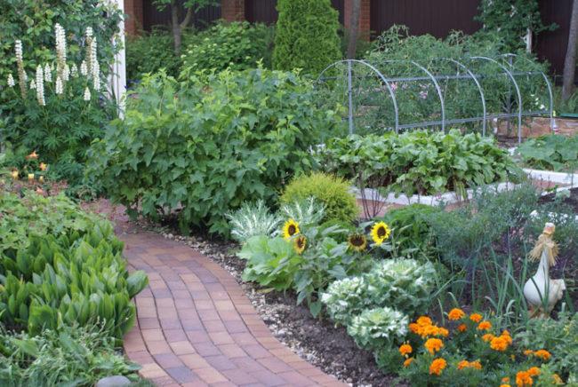 Зелёные растения в огороде