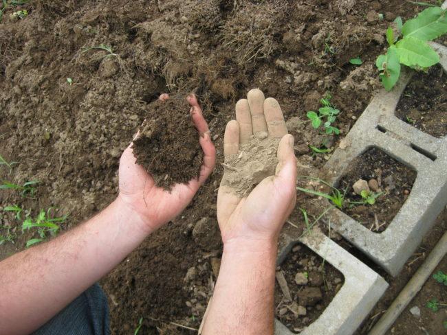 Почва в руках у мужчины в саду
