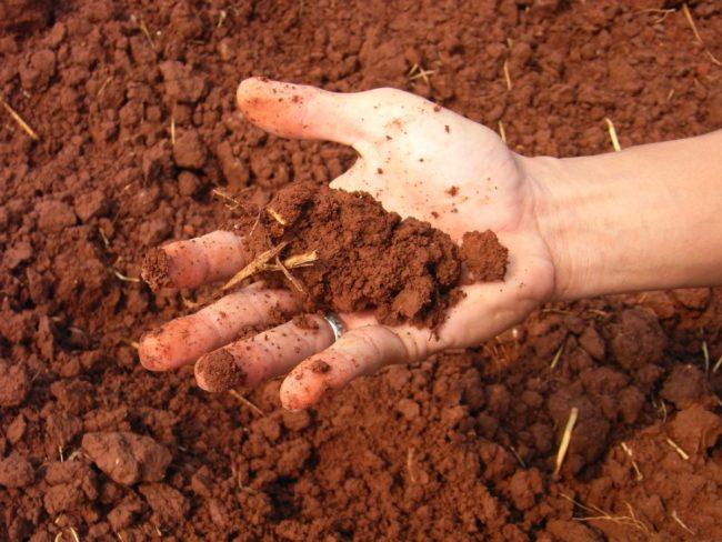 Тяжёлая почва в руке в саду