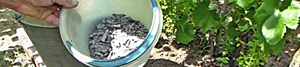 Удобрение малины весной золой с ведра
