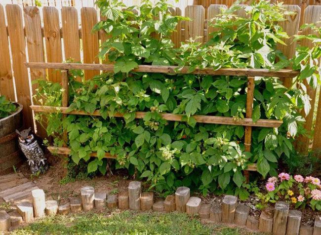 Деревянная шпалера для малины