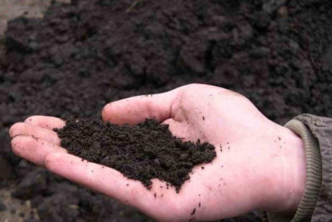 Чернозём в руке и на земле в саду