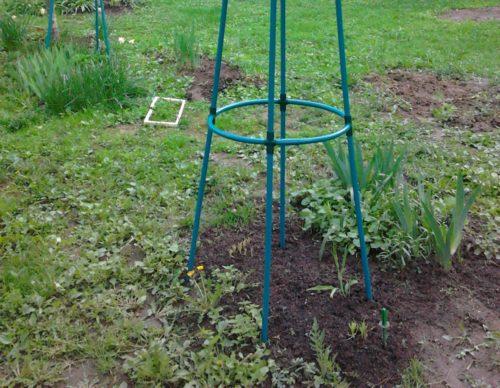 Гнездовой метод посадки малины