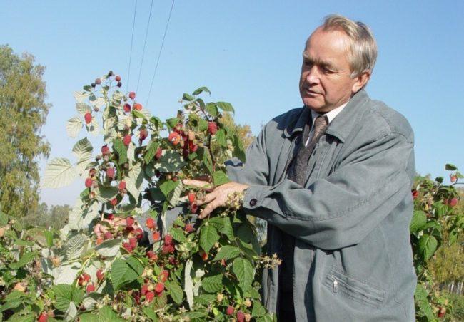 Казаков селекционер малины