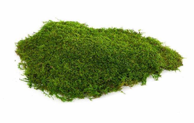 Мох на белом фоне зелёного цвета