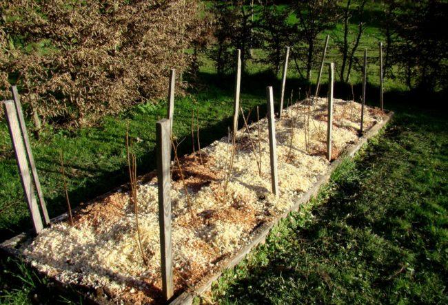 Мульчирование малины в саду