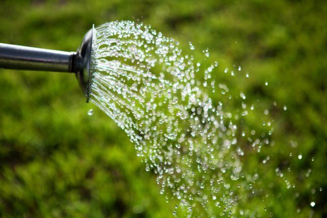 Чистая вода выливаемая из лейки
