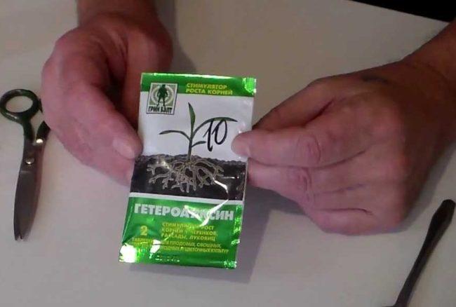 Гетероауксин в пакетике в руках мужчины