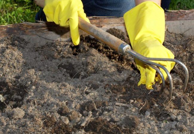 Взрыхление почвы в саду для малины
