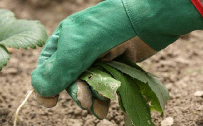Очищение земли от сорняков