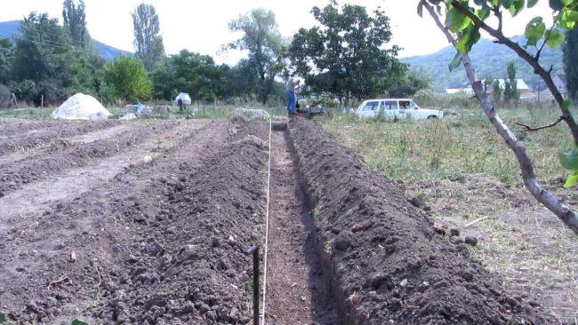 Выкопанная траншея в саду для малины