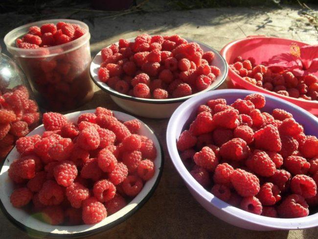 Красные ягоды малины в тарелках