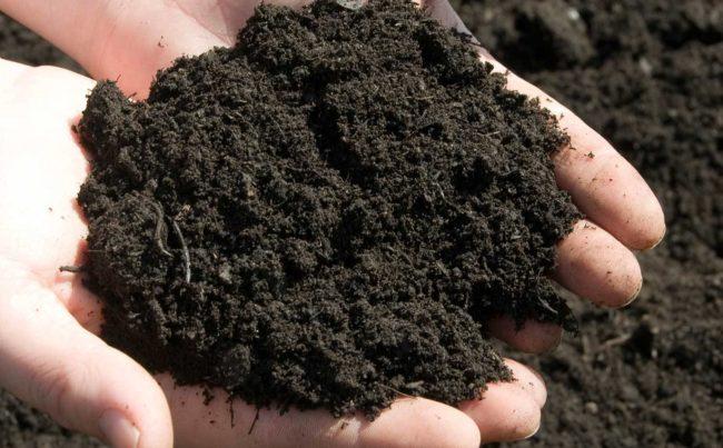 Чернозём в руках садовода