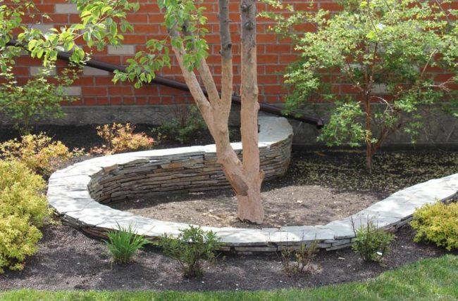 Дерево и кустарники в саду