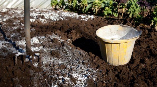 Известкование почвы для посадки