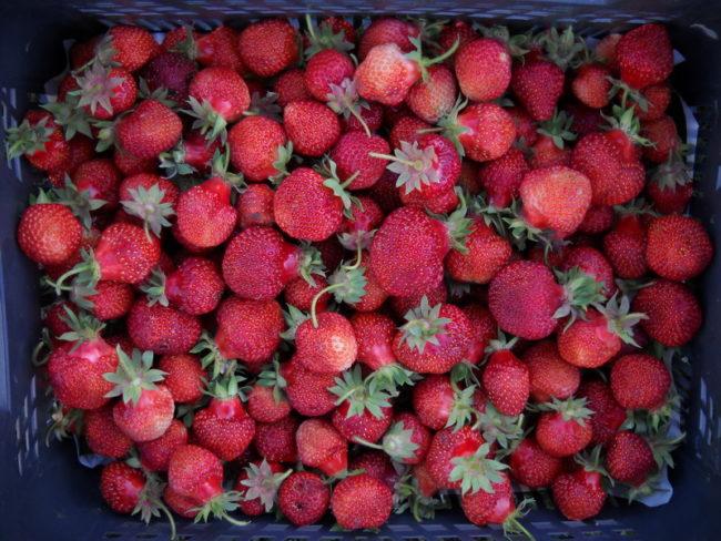 Ящик с ягодами клубники Дукат
