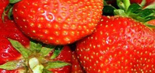 Плоды клубники Дукат вблизи