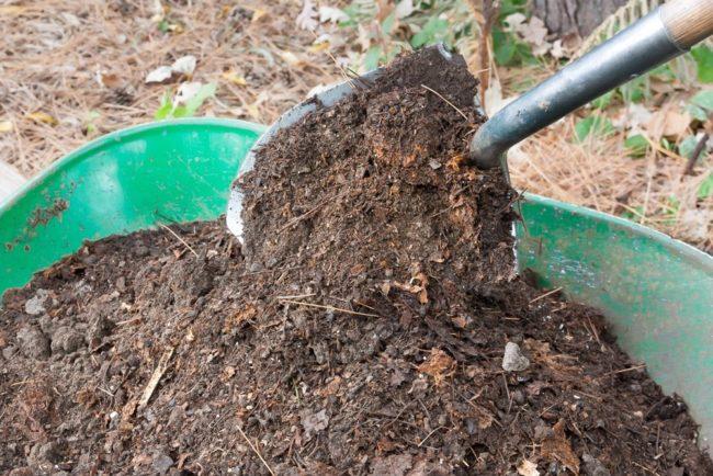 Тазик компоста для удобрения клубники