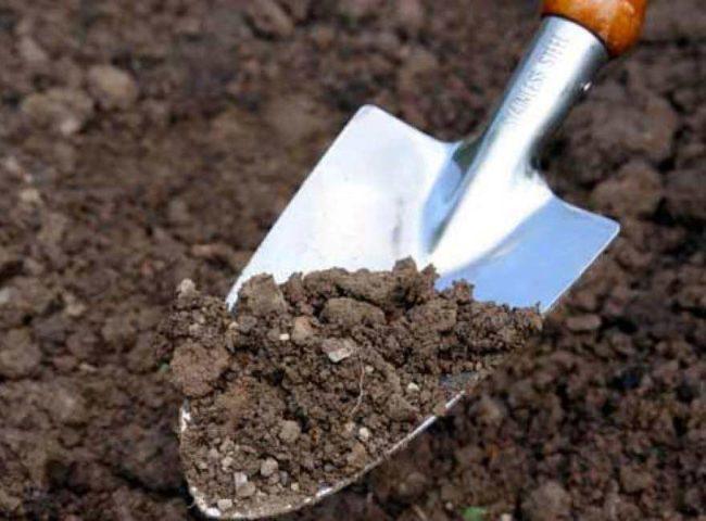 Лопата для выкапывания с землёй в саду