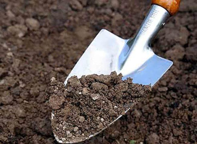 Земля на лопате в саду в приближенном виде