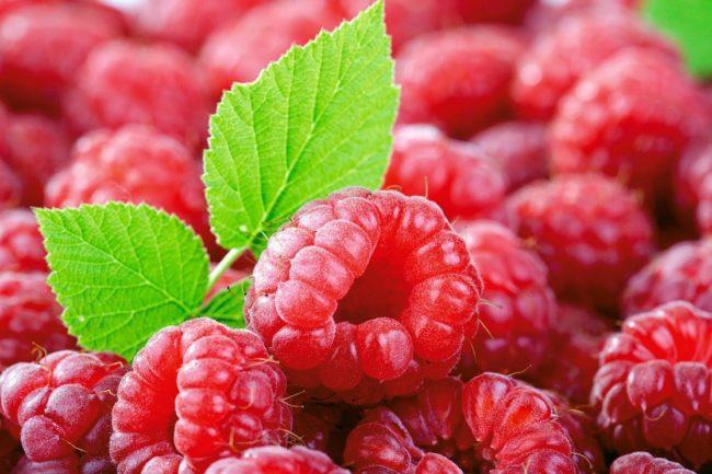 Полезная ягода малины и листья для заварки лечебного настоя