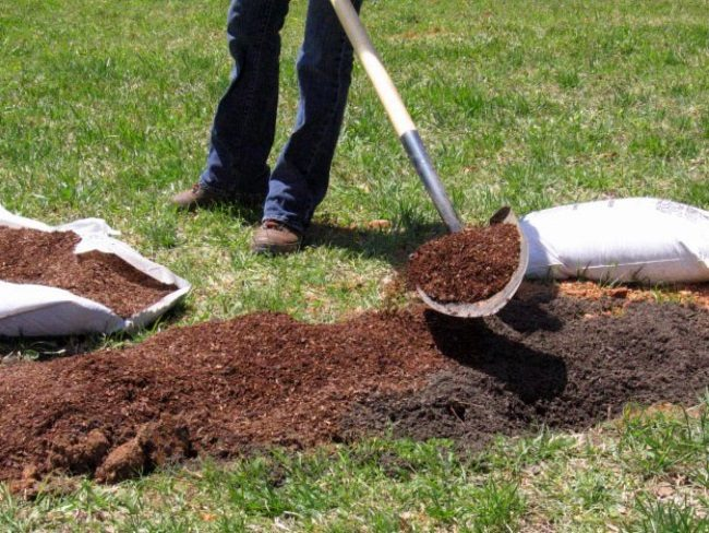 Подготовка плодородной земли для высадки саженцев малины ремонтантной