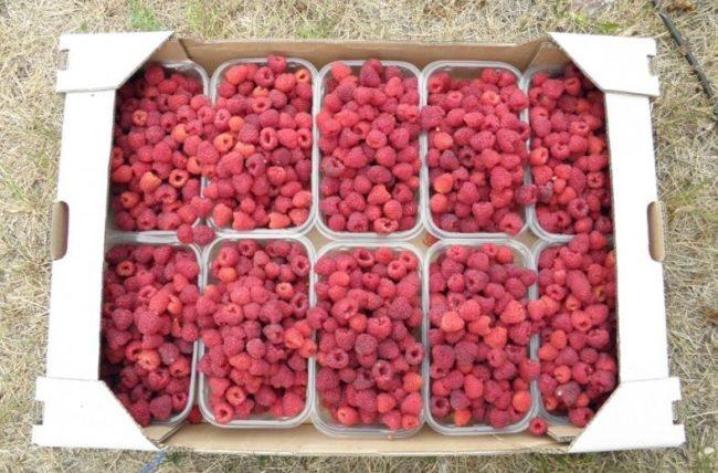 Деревянный ящик с ягодами малины