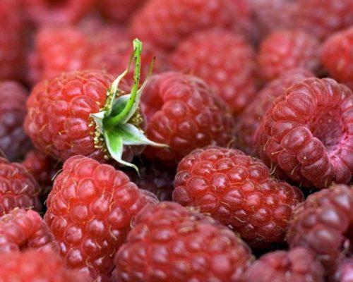Горсть сочных и сладких ягод малины карамелька