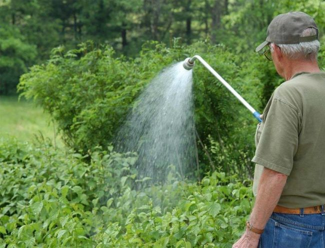 Садовод поливает малину из распылителя