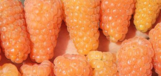 Огромные плоды малины Оранжевое чудо
