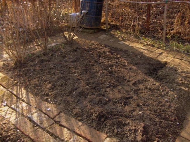 Подготовка почвы под малину