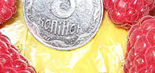 Плоды малины Краса России вблизи и монета