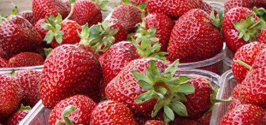 Плоды клубники Альбион вблизи