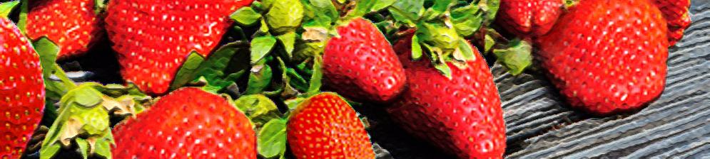 Плоды клубники Корона на кусте