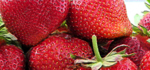 Плоды клубники Мармелада вблизи