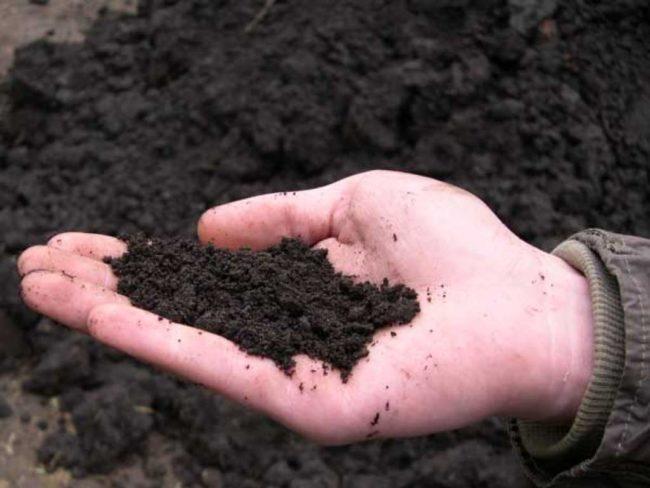 Плодородная почва на ладони