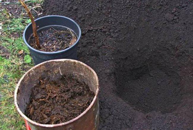Готовим плодородную смесь для заполнения посадочной ямы для малины