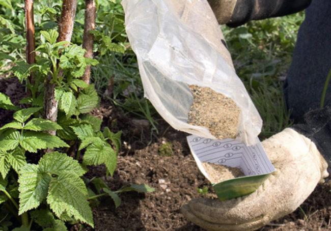 Внесение минерального удобрения под малину в летний период