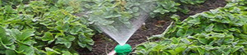 Полив клубники в открытом грунте