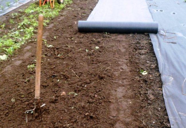 Укрытие почвы нетканым материалом спандбонд на садовом участке