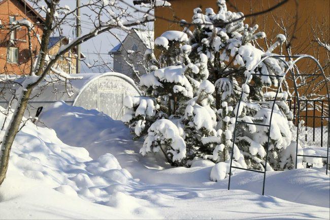 Много белого снега в саду