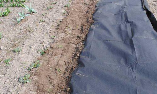Присыпанный грунтом края нетканого материала спанбонда