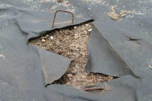 Лунка для посадки, размещенная в вырезе агроволокна