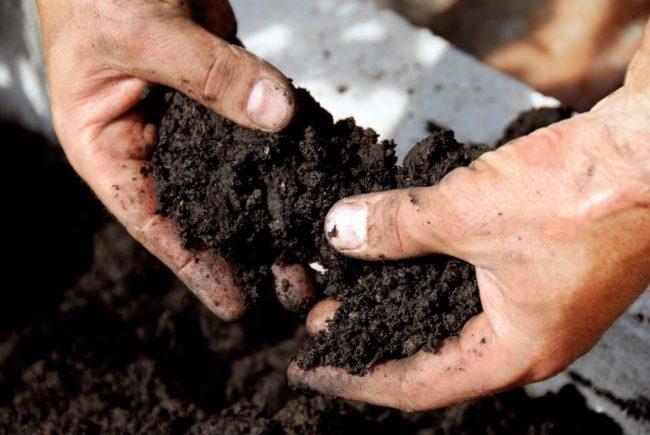 Перегной и торф смешанный с почвой