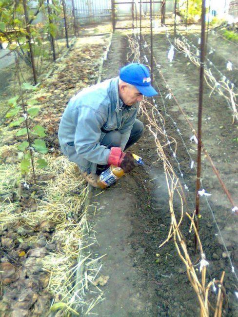 Подготовка малины к зимнему сезону