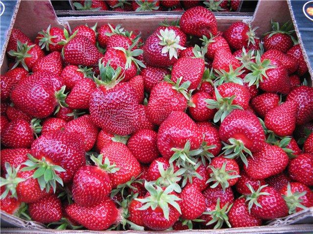 Ящик с ягодами клубники Мармелада