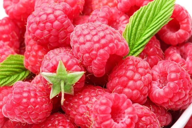 Крупные ягоды ремонтантной малины сорта дочь геракла