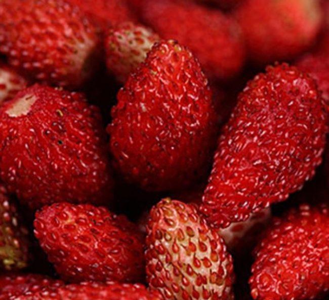 Спелые ягоды мелкоплодной клубники ремонтантного сорта Барон Солемахер