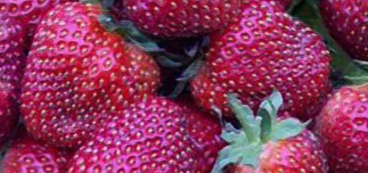 Плоды клубники сорта Чёрный принц вблизи